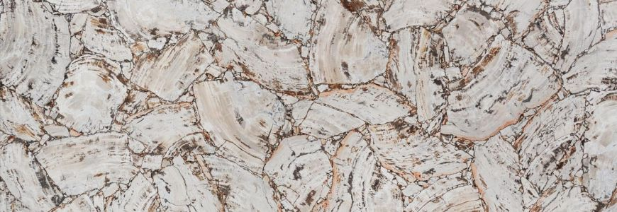 PETRIFIED WOOD WHITE